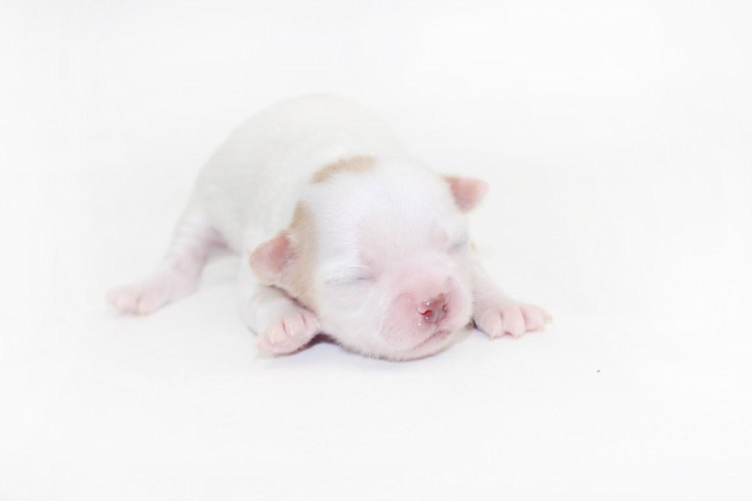 Troublemaker - 1 Week Old - 9.5 ozs