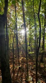 Peeking Through the Trees