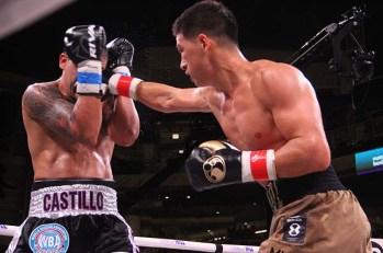 Bivol Castillo15