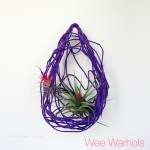 Wee Warhols, Austin, yarn, air plants, plant holder
