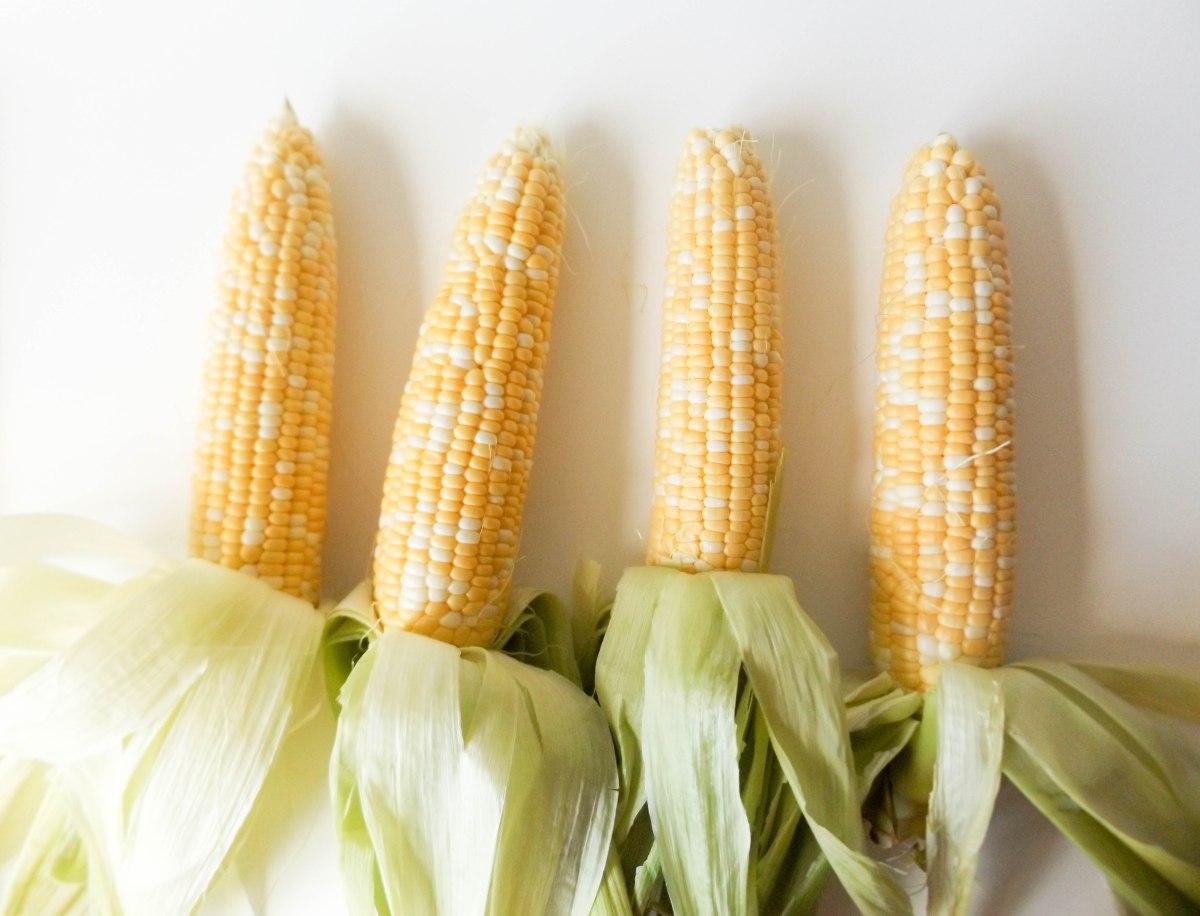 Corn (1 of 1)