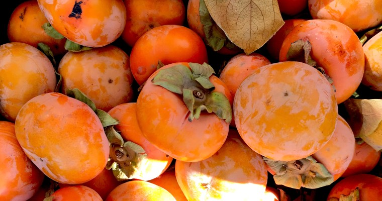 Featured Ingredient: Persimmons