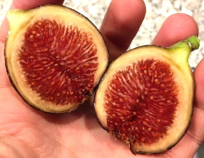 SCOTT/'s BLACK Fig Tree Cutting