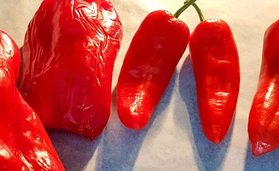 paprika recept paprika poeder recept paprika poeder maken paprika poeder paprika gedroogde paprika droge van paprika conserveren