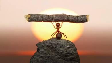 Photo of Hayatta Başarılı Olmak İçin İzlenmesi Gereken 7 Adım!