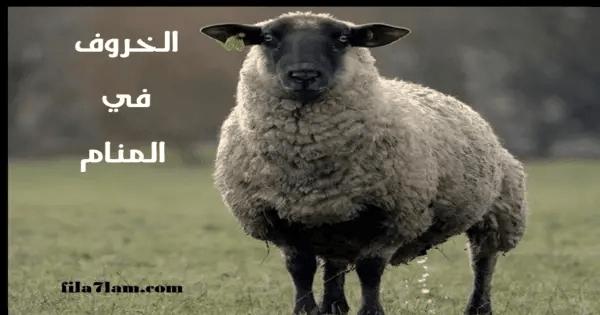 تفسير حلم الخروف في المنام وذبح الخروف وشراؤه وأكله في الاحلام