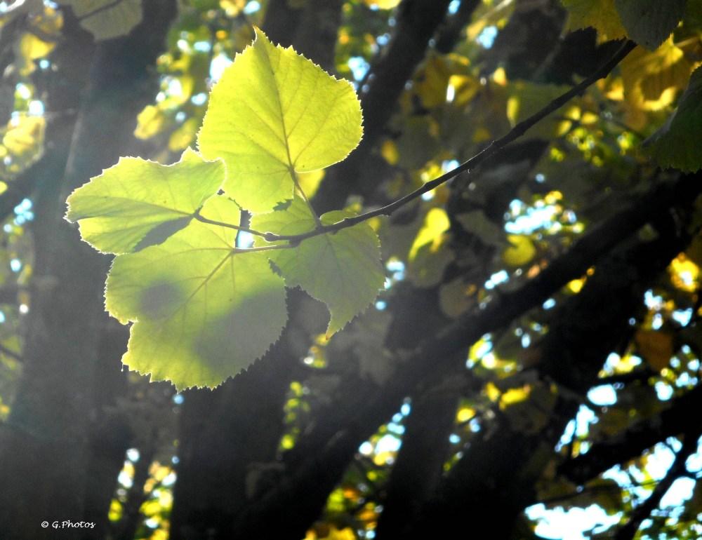 Premières photos d'automne (1/4)