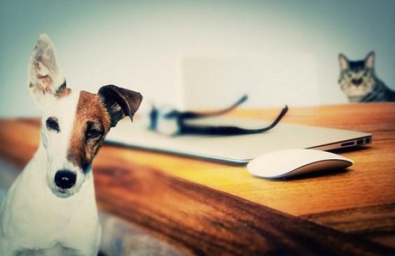 Psicologia e animali domestici - Crescita-Personale.it