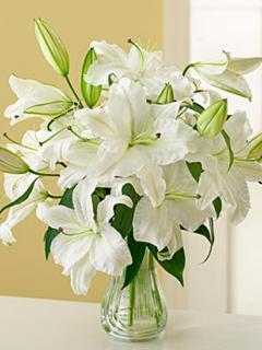 Белые лилии в вазе - картинка на телефон №798271