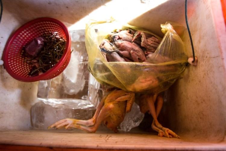 柬埔寨烤小鳥