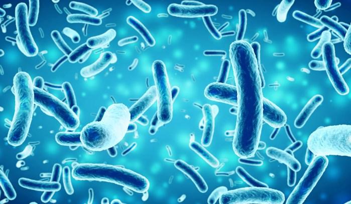 Infections nosocomiales : une nouvelle bactérie en cause - Top Santé