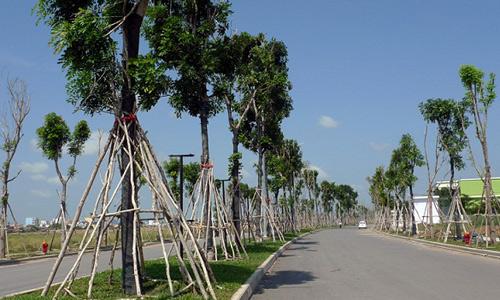 Chưa đầy 4 tháng, đất phía Tây Sài Gòn đã tăng giá gấp đôi 1