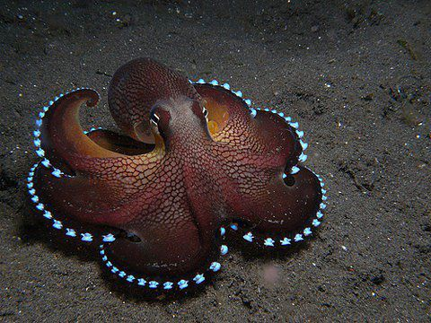 Image result for octopus mimicry camouflage