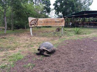 Os famosos animais de Galápagos chamaram a atenção de todos.
