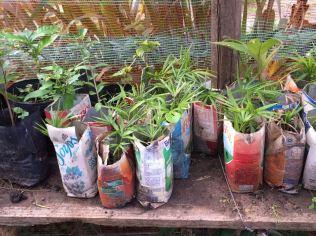 Horta com utilização de produtos de reciclagem