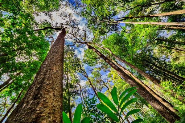 Tropical rainforests are markedly different from temperate forests. 7 Steps You Can Take To Help Save The Amazon Rainforest