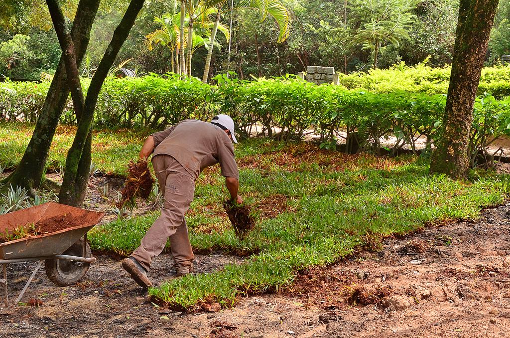 Adubação orgânica em jardins e parques