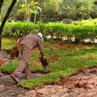 A importância da adubação orgânica na nutrição do solo