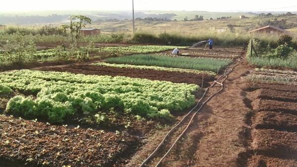 Assentamento: lotes cedidos para restabelecerem as atividades agrícolas