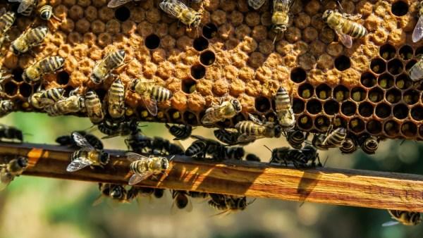 Cera de abelha possui opções de uso que auxiliam o setor econômico