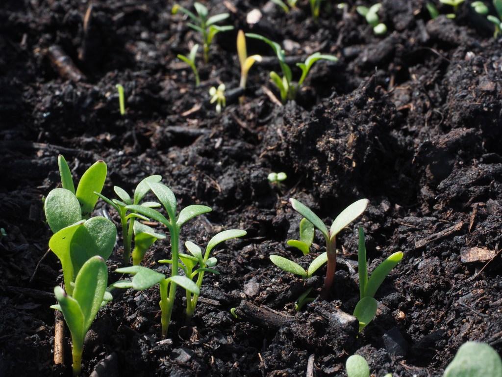 Conservação do solo: plantações sustentáveis