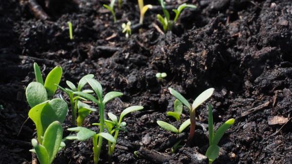 A conservação do solo e as boas práticas que garantem sua produtividade