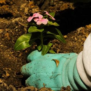 Desbaste: o significado e a sua influência no plantio