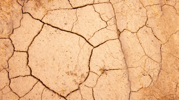Desertificação compromete a qualidade e fertilidade do solo