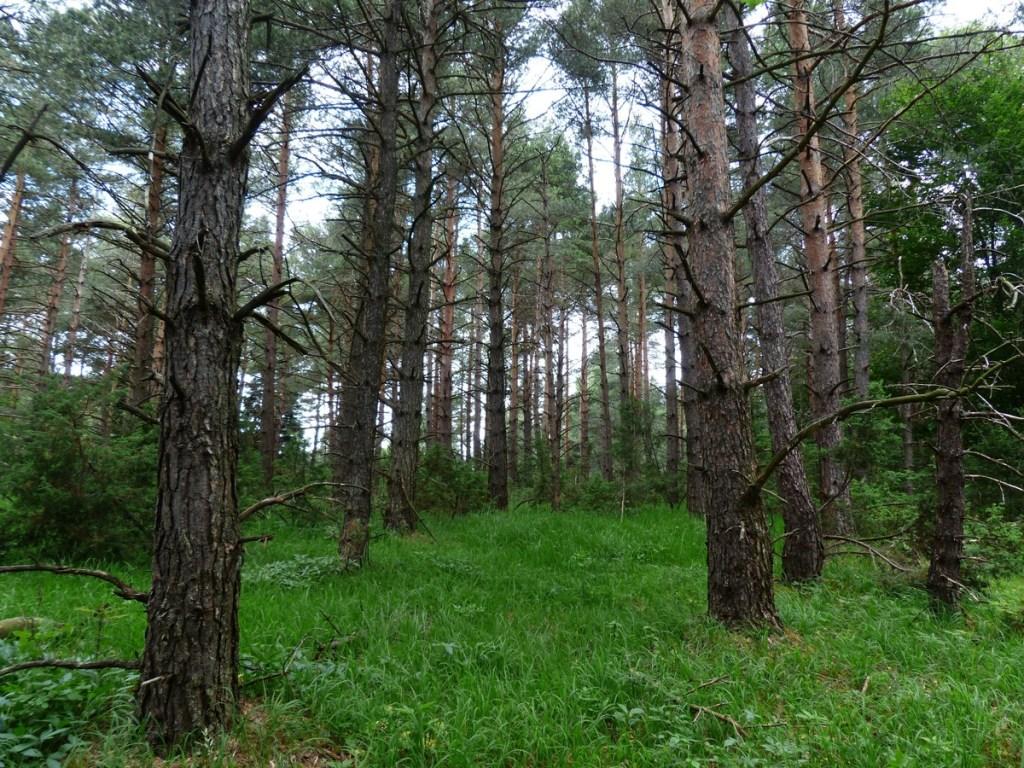 Silvicultura: plantio de árvores