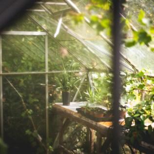 Estufa e as sua influência nos cultivos no mundo agro