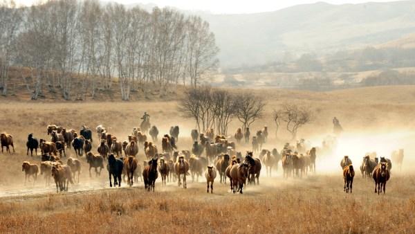 Berbere é equino conhecido pela alta velocidade e resistência