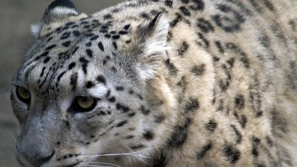 Habitat determina o abrigo ideal para espécies de animais