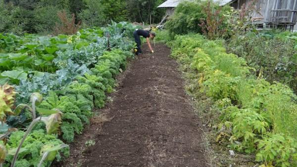 Verduras são livres de carboidratos e previnem doenças do coração