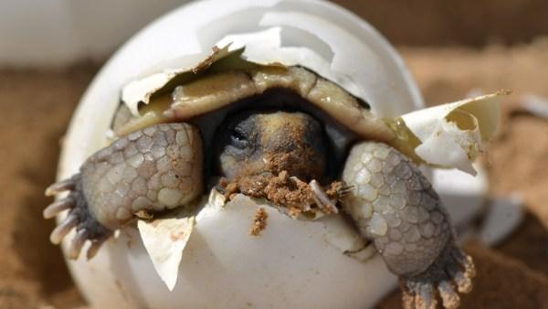 Eclosão acontece quando animais rompem os ovos e nascem