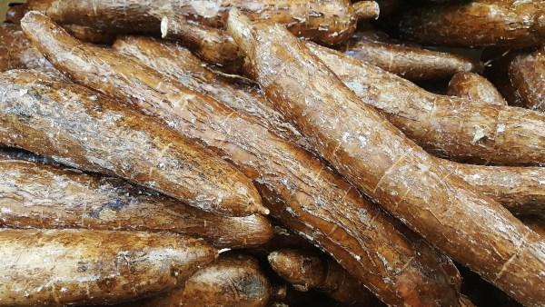 Fécula é substância produzida a partir de raízes e tubérculos