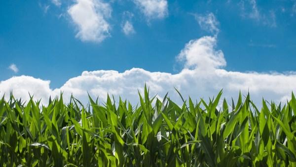 Aprosoja auxilia o produtor rural voltado para a cultura de soja e milho