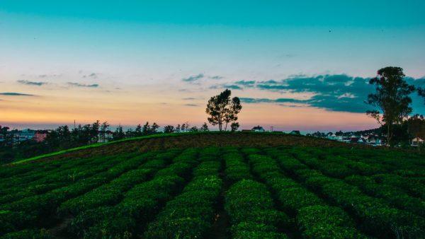 Glifosato é um dos herbicidas mais usados no mundo