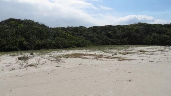 Restingas compõem as paisagens das zonas litorâneas brasileiras