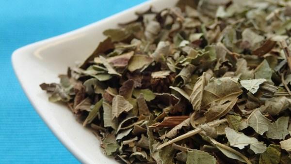 Amora miura é planta conhecida pelas propriedades medicinais