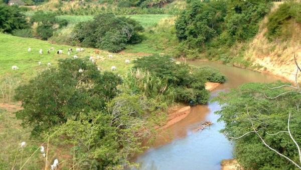 Mata ciliar é a vegetação que acompanha margens de cursos de água