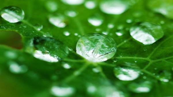 Orvalho é um fenômeno natural importante para o meio ambiente