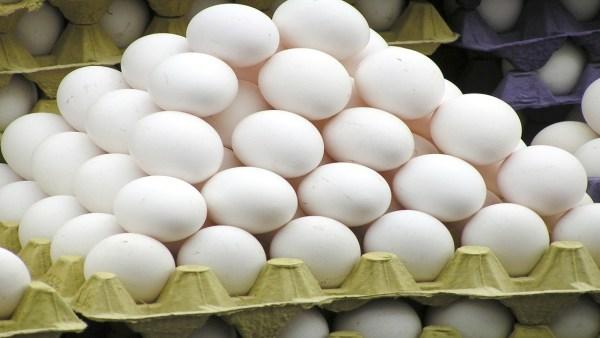 Ovos são ingredientes indispensáveis para uma dieta saudável
