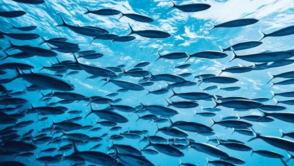 Piracema é o nome dado ao período de reprodução dos peixes
