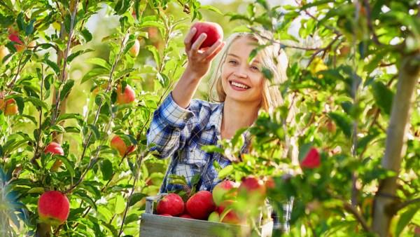 Pomar é o nome dado a um terreno de árvores frutíferas
