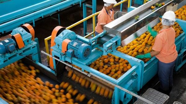Cutrale é uma das maiores produtoras de suco de laranja do mundo