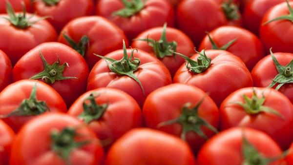 Tomate é um dos frutos mais versáteis e consumidos em todo o mundo