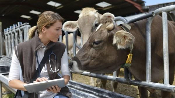 Zootecnia promove avanços importantes no universo da pecuária
