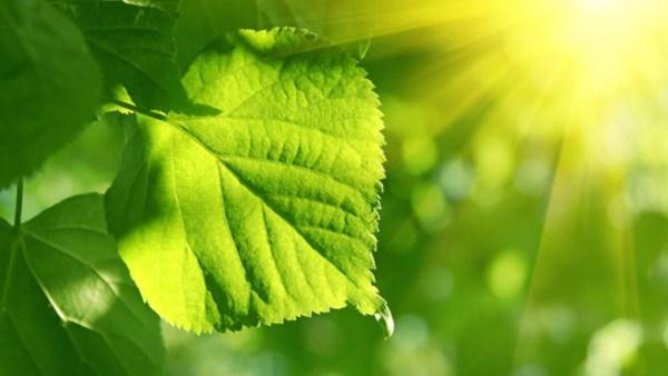 Fotossíntese é essencial e transforma energia solar em energia química