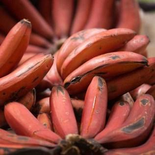 Banana vermelha tem origem no Caribe e é apreciada no mundo todo