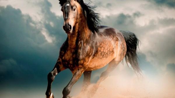 Cavalo é um dos equídeos mais populares em todo o Brasil